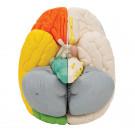 Нейро-анатомическая модель мозга, 8 частей