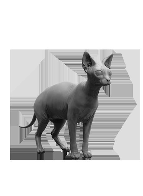 Манекены животных, кошки